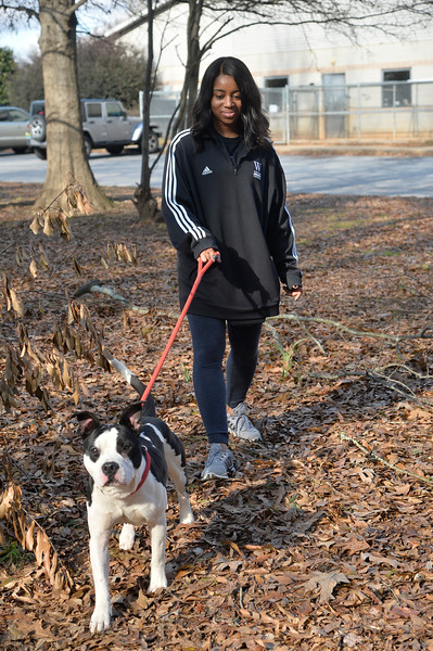 LivingWithDogs2019-3