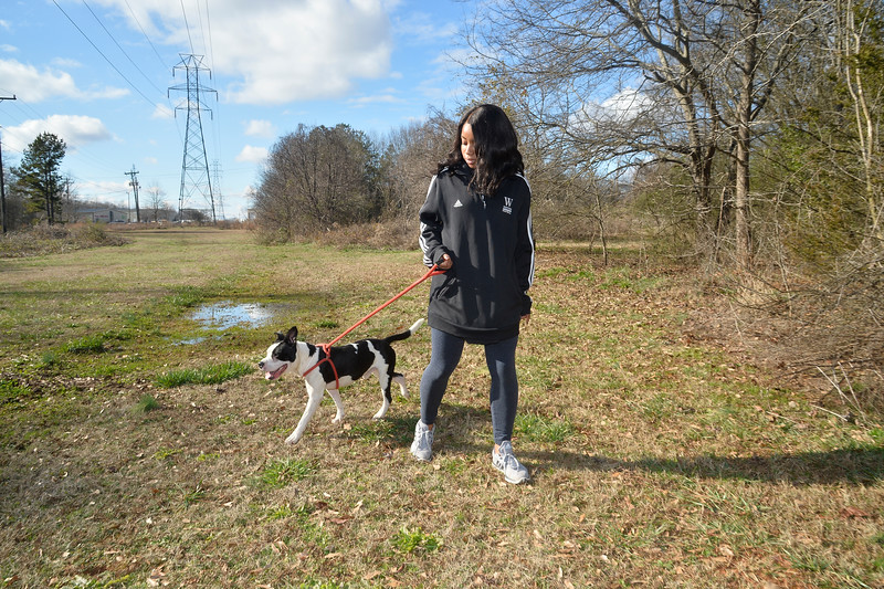LivingWithDogs2019-7