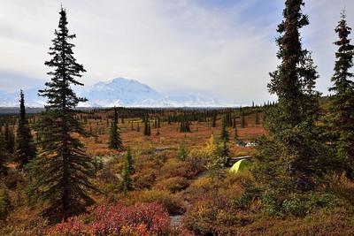 Campsite Wonders of Denali