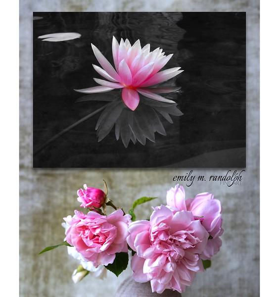 Floating Lotus Fantasy