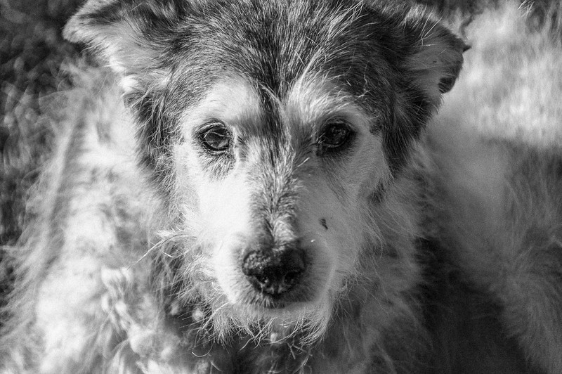 Doggie Portrait2