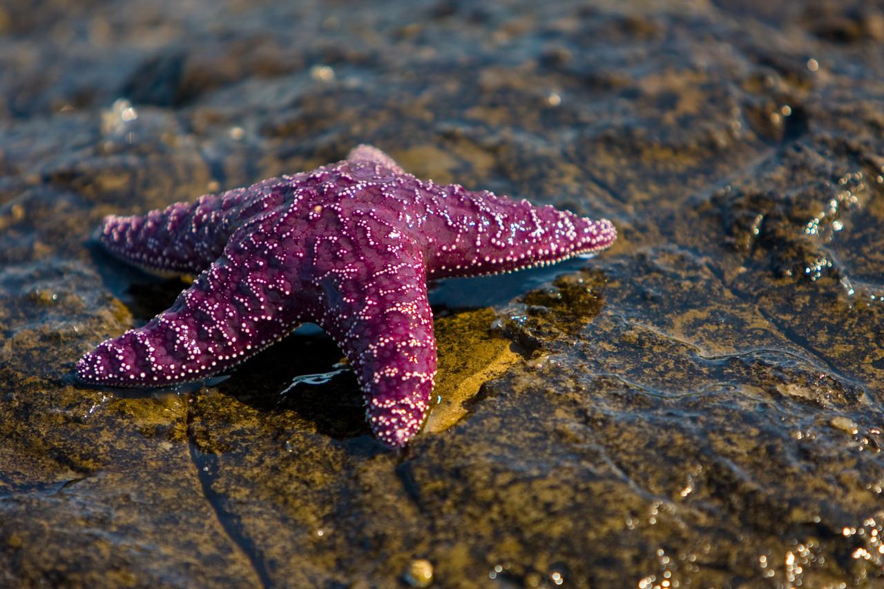 Tide Star