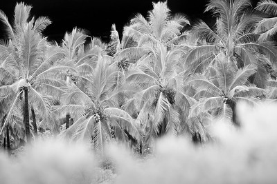Winter-Palms