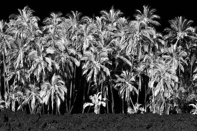 Palms-Ohana