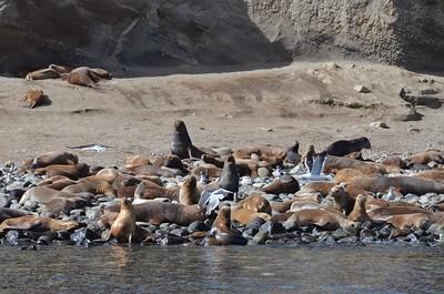 Patagonia_014DSC_3552.jpg