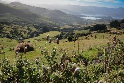 A_NZ_002_DSC_1431-4.jpg