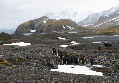 A small group of penguins and a group from our ship in the distance.