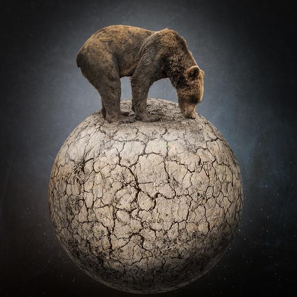 Shrinking habitat