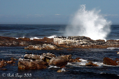 Waves breaking at the Cape of Good Hope - Cape Town, South Africa ... March 12, 2010 ... Photo by Rob Page III