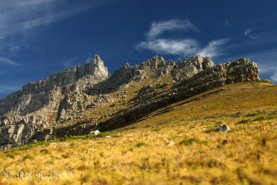 Looking up at Table Mountain - Cape Town, South Africa ... March 11, 2010 ... Photo by Rob Page III