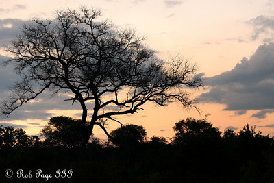 A savanna sunset - Sabi Sabi, South Africa ... March 13, 2010 ... Photo by Rob Page III