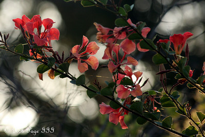 Beautiful flowers - Sabi Sabi, South Africa ... March 14, 2010 ... Photo by Rob Page III