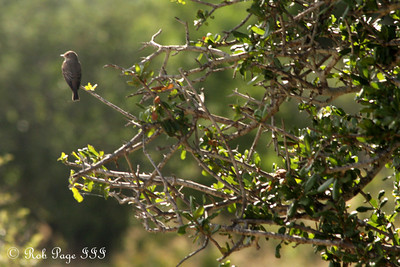 What type of bird is this? - Sabi Sabi, South Africa ... March 14, 2010 ... Photo by Rob Page III