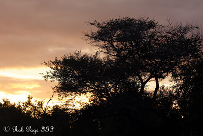 Sunrise on the savanna - Sabi Sabi, South Africa ... March 15, 2010 ... Photo by Rob Page III