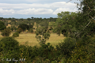 The savanna - Sabi Sabi, South Africa ... March 15, 2010 ... Photo by Rob Page III