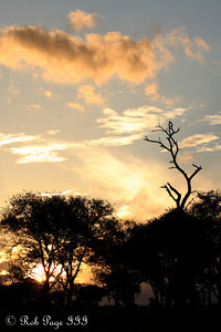 Sunset over the savanna - Sabi Sabi, South Africa ... March 15, 2010 ... Photo by Rob Page III