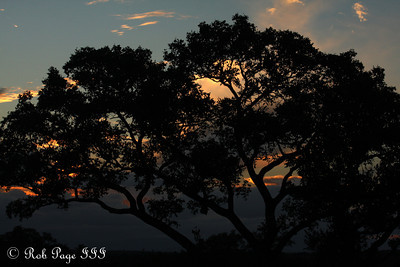 Sunset - Sabi Sabi, South Africa ... March 15, 2010 ... Photo by Rob Page III