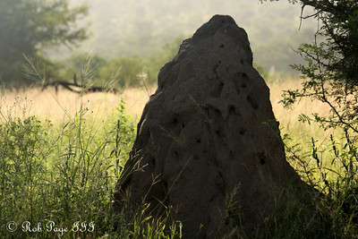 A termite mound begins - Sabi Sabi, South Africa ... March 16, 2010 ... Photo by Rob Page III