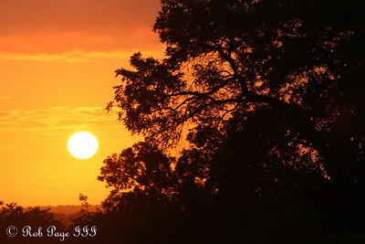 Sunrise in the African jungle - Sabi Sabi, South Africa ... March 16, 2010 ... Photo by Rob Page III