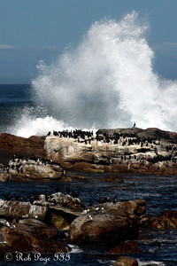 Birds at the Cape of Good Hope - Cape Town, South Africa ... March 12, 2010 ... Photo by Rob Page III