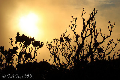 Sunset from Table Mountain - Cape Town, South Africa ... March 11, 2010 ... Photo by Emily Page