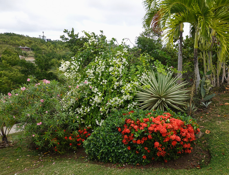 Golf Club landscaping, Castries, Saint Lucia.
