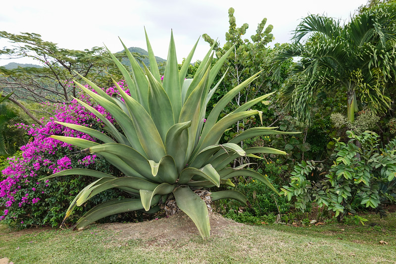 Gardens at a Gold Resort on Castries, St. Lucia.