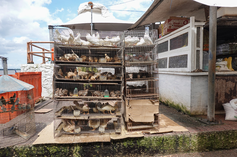 Ver-o-Peso's feathered friends in cages where they really don't want to be on New Year's day. Belen, Brazil.