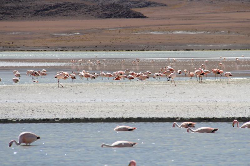 Los Flamingos (7 of 7)