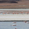 Los Flamingos (7 of 7)