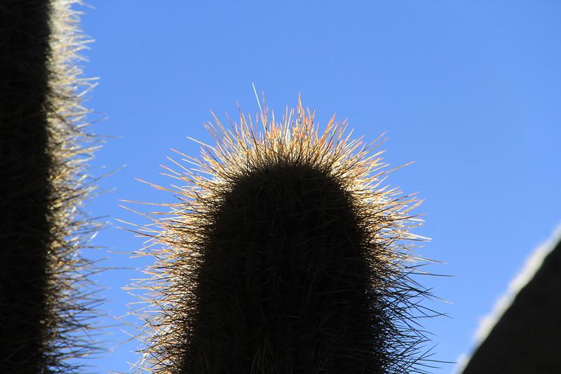 Bosque del Saguaro (9 of 10)