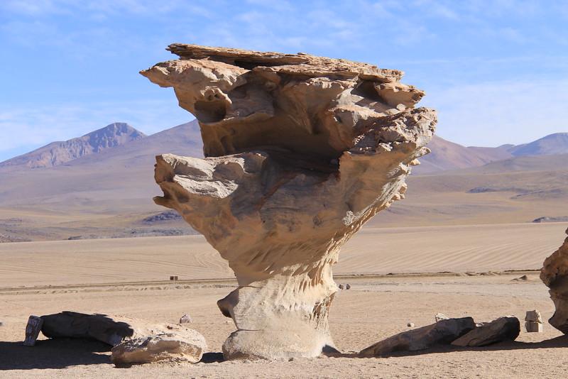 árbol de piedra (1 of 2)