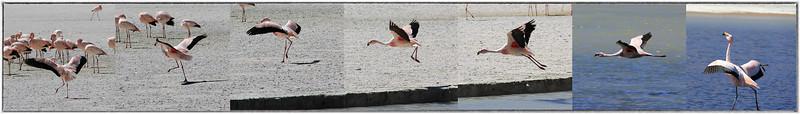Los Flamingos (4 of 7)