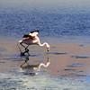 Los Flamingos (5 of 7)