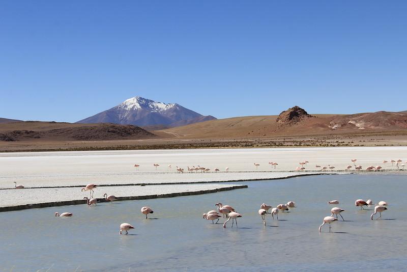 Los Flamingos (6 of 7)