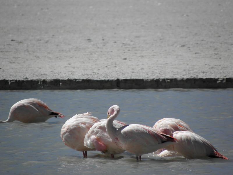 Los Flamingos (2 of 3)