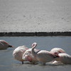 Los Flamingos (2 of 3)