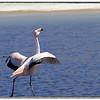 Los Flamingos (1 of 7)