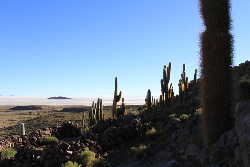 Bosque del Saguaro (7 of 10)