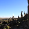 Bosque del Saguaro (7 of 10)