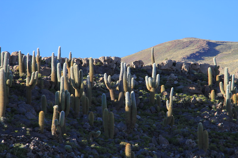 Bosque del Saguaro (4 of 10)