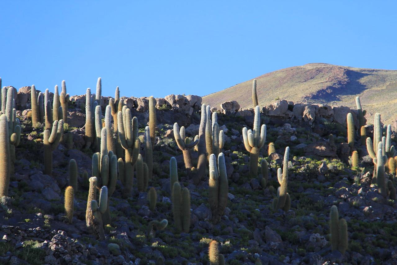 Bosque del Saguaro (4 of 10)