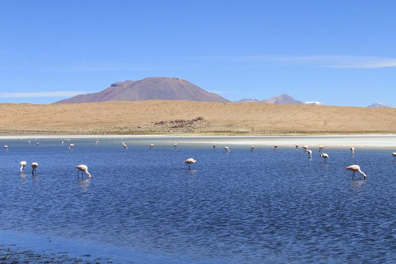 Los Flamingos (2 of 7)