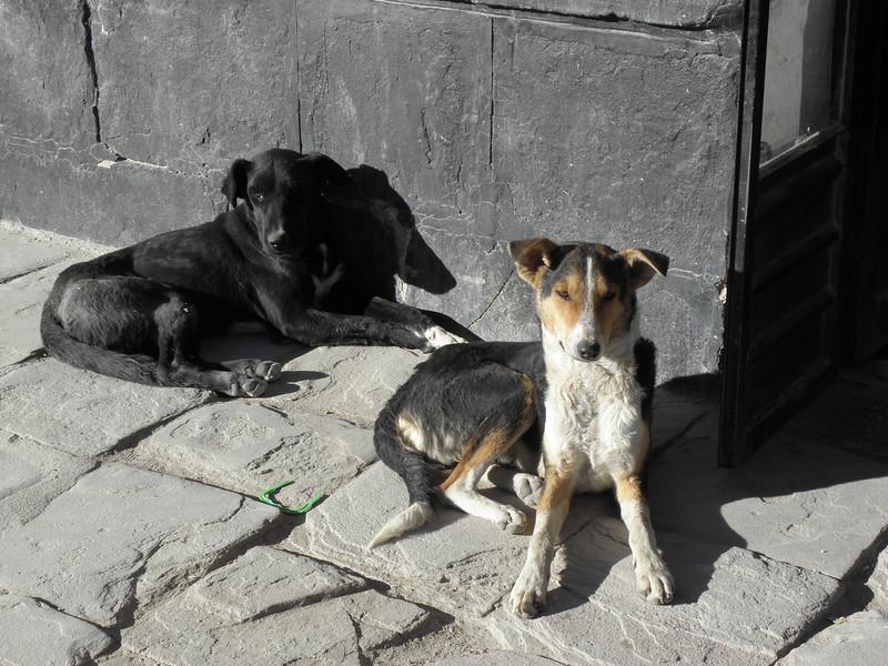Los Perros  de Uyuni