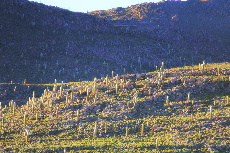 Bosque del Saguaro (10 of 10)