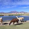 El Pueblo en el Camino (1 of 4)