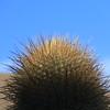 Bosque del Saguaro (3 of 10)