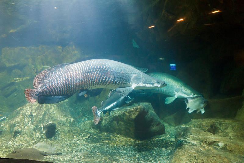 The Aquarium on Sentosa Island