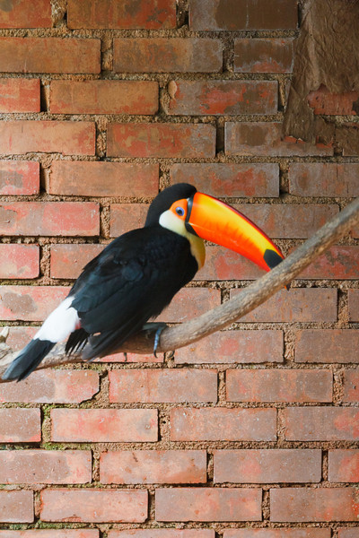 Tucan at the Butterfly Park