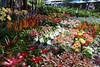 Jatuchak Flower Market in Bangkok